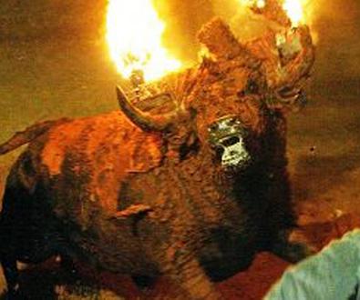 11/5/10: ARCHIVE - Bulls On Fire: Stop Sadistic Ritual In Spain