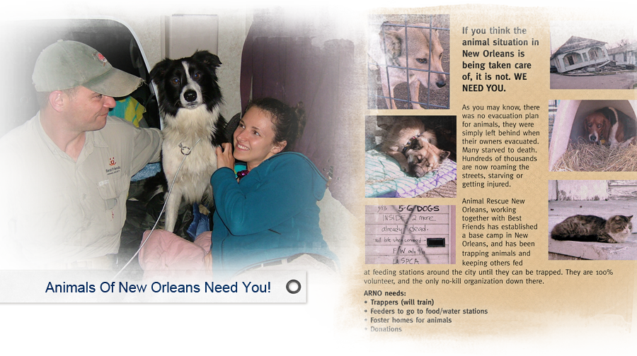 jessica higgins of arno with rescue dog and Best Friends staff 900x504