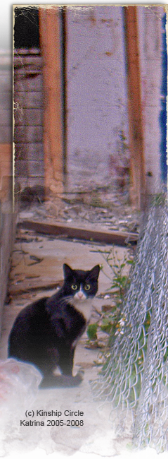 Baby Noah lookalike cat on NOLA streets 239by650