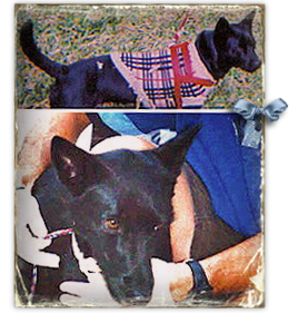 Noche, a small Shepherd mix, was last seen in New Orleans Superdome 268x281