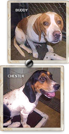 Save Buddy and Chester from death at Roicy gas chamber shelter 241x468