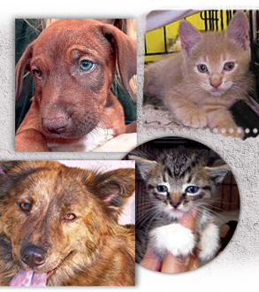 Keep ARNO doors open by adopting our lovable animals 293x330