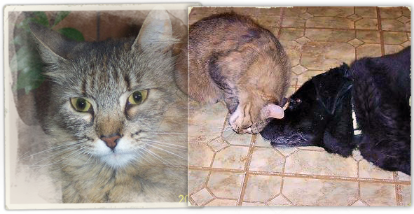 Lucy, the cat of Katrina rescuer Maria Alvarez, was senselessly killed at Jefferson Parish Animal Shelter 591x306