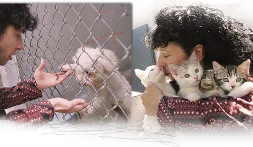 Animal activist and ARNO founding coordinator Judie Mancuso spearheaded a bill to require Californians to spay neuter cats and dogs 510x297