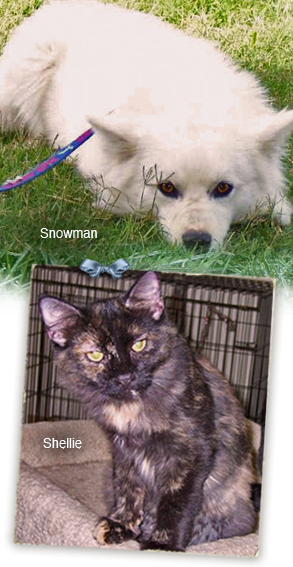 Snowman and Shellie are two of many beautiful animals at PAWS Plaquemines who need forever homes 293x567
