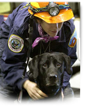 Jake, a canine rescue hero from 911 and Katrina, has died 303x360