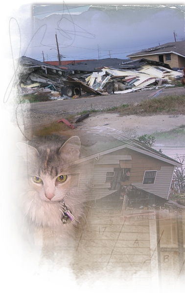 Cats who survived Katrina live in the streets, on their 3rd or 4th litter 378x600