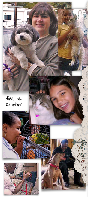 collage of Katrina evacuees reunited with their beloved companion animals 293x652