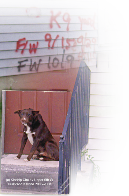 a dog waits on doorsteps in Upper 9th Ward West 422x640