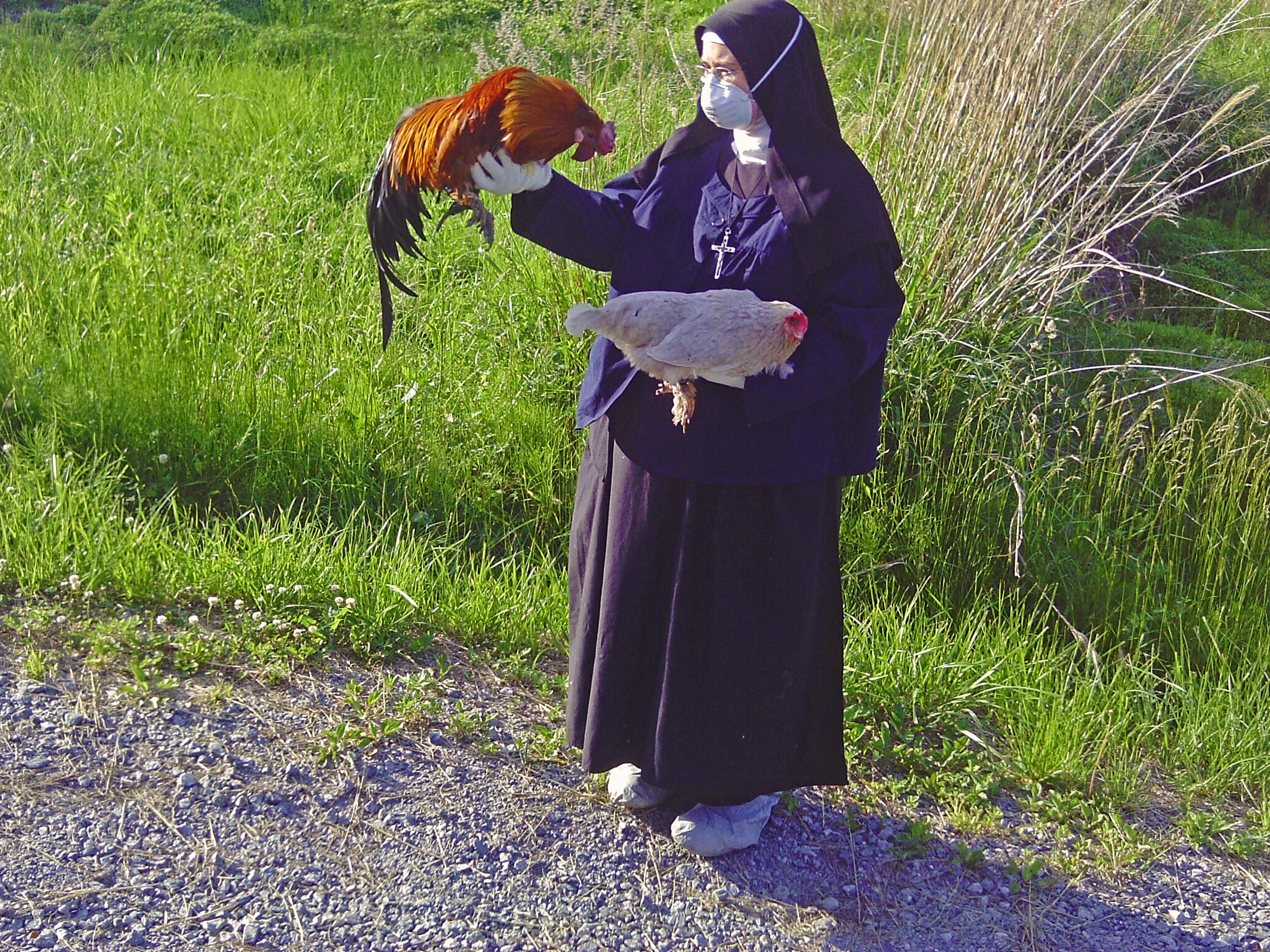 - SisterMichaelMarie_6-11-11_rescued_chickens_Japan_KinshipCircle_5