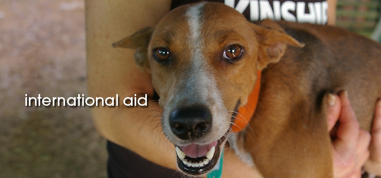 5_international-aid