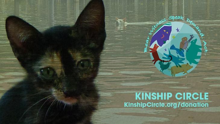 2t_72-ID_KinshipCircle
